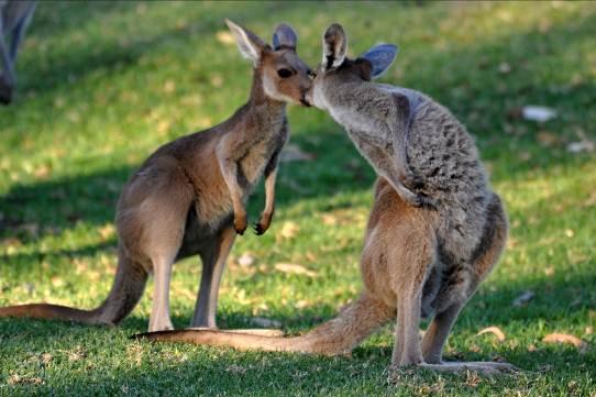 OBRÁZEK : australie_7.jpg